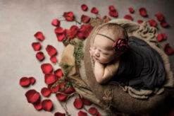 Red Roses Redmond Newborn Photographer Eden Bao