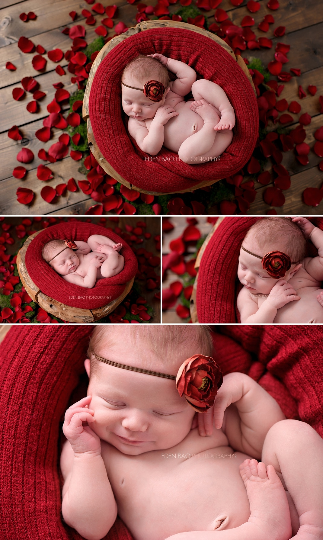 Newborn photographer seattle red rose petals