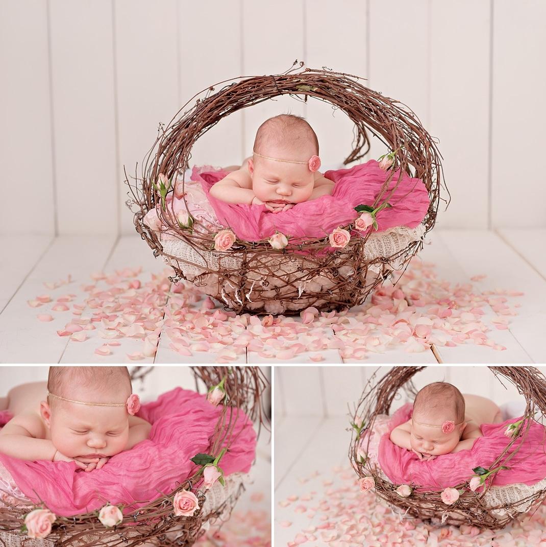 Seattle Area Newborn Photography Willow basket pastel pink rose petals