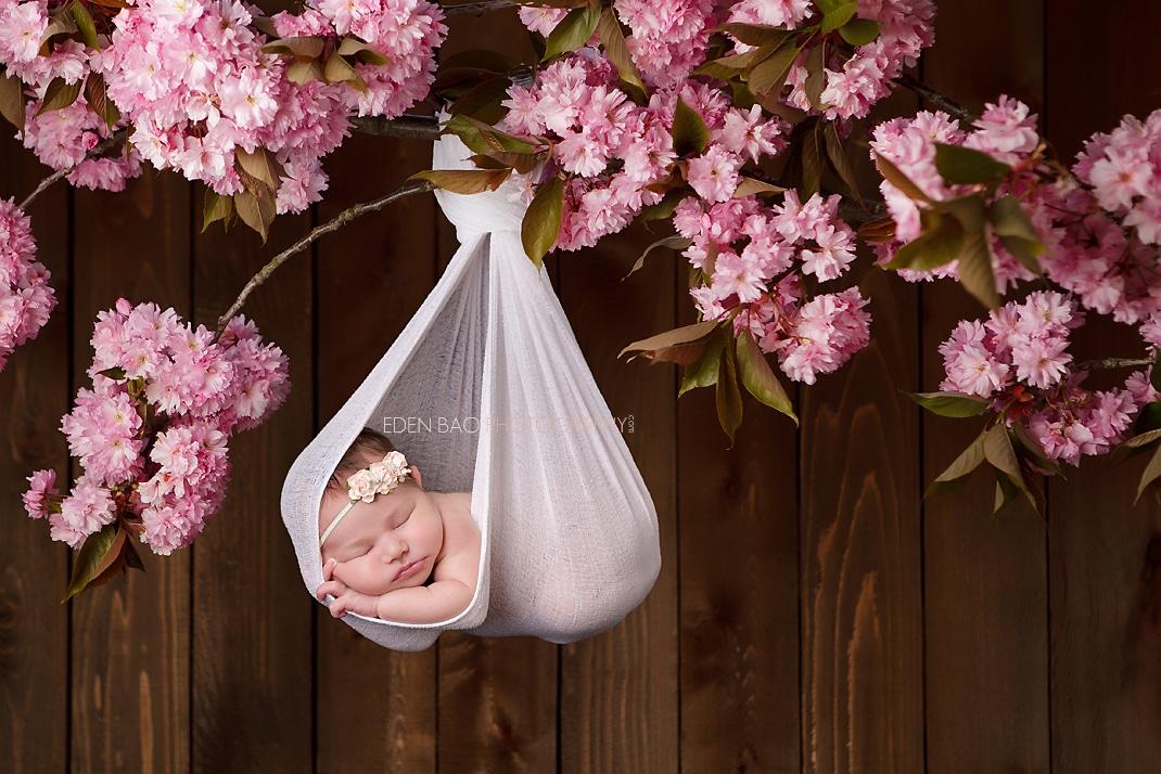 Seattle Newborn Photographer cherry blossums tree