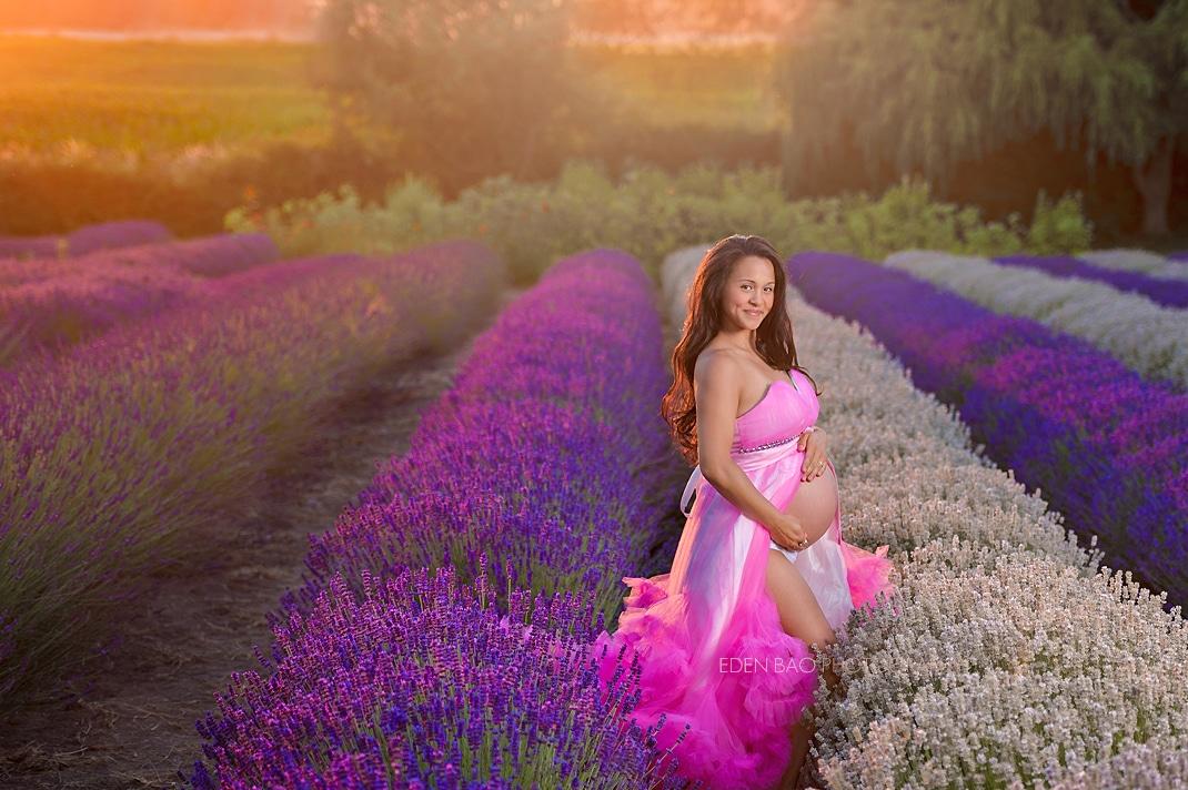 Best Maternity Photographer lavender fields sunset
