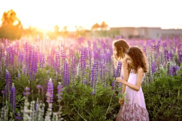 Lupine Meadows Seattle Family Photographer