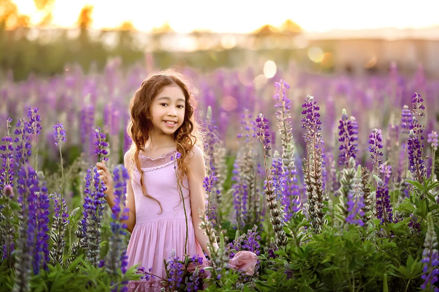 Lupines Seattle Family Photographer
